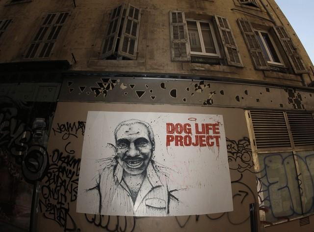 © Dog Life Project